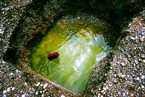 14. - Stone wash