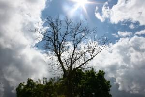 19. - Der Baum