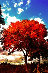 25. - Herbst II (Nachbearbeitung)