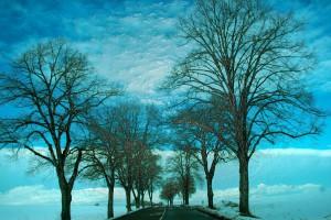 37. - COLD DAYS V