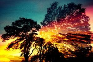 61. - SCREAMING TREE