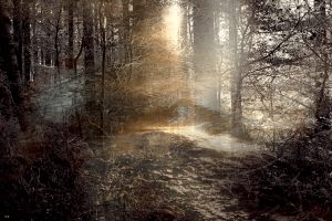 FAIRYTALE FOREST 4