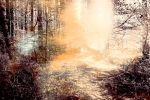 FAIRYTALE FOREST 5